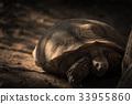 Sleeping tortoise under tree with cookie light 33955860