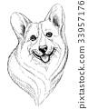 Vector hand-drawn sketch portrait of welsh corgi  33957176