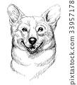 Vector hand-drawn sketch portrait of welsh corgi  33957178