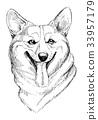 Vector hand-drawn sketch portrait of welsh corgi  33957179