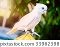 Parrot, lovely bird, animal and pet 33962398