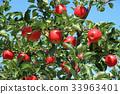 빨갛게 물든 사과 33963401