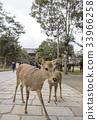 꽃사슴, 나라현, 동대사 33966258