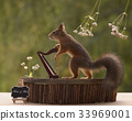 squirrel playing on a harp 33969001