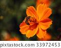 가을, 꿀벌, 꽃 33972453