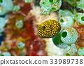 河豚 河豚魚 魚 33989738