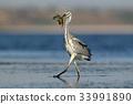 fish, heron, beak 33991890