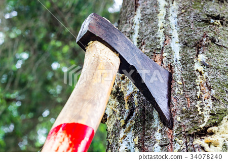 An ax is stuck in a tree in the forest 34078240