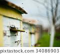 蜜蜂 蜂窝 养蜂人 34086903
