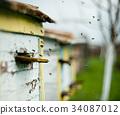 蜜蜂 蜂窝 养蜂人 34087012