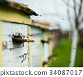 蜜蜂 蜂窝 养蜂人 34087017