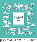 Birds pelicans and fish background 34098848