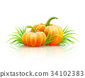 Ripe pumpkin vegetables at soil autumn harvest 34102383