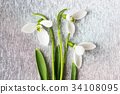 Snowdrops bouquet on shiny silver background 34108095