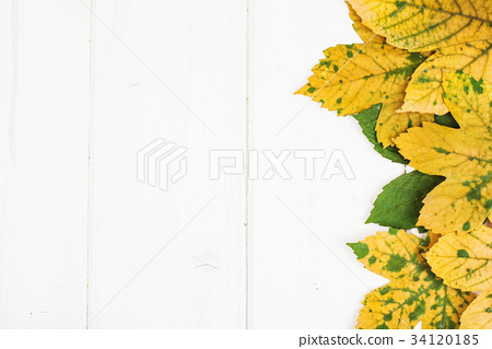 Abstract layout for the background of maple leaves 34120185