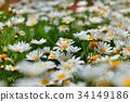 flower, flowers, bloom 34149186