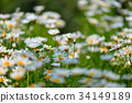 花朵 花卉 花 34149189