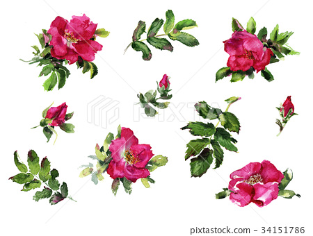 Briar Rose flowers handmade watercolor pattern 34151786