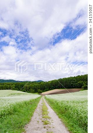 Shinshu scenery Soba flower Nakayama plateau 34155007