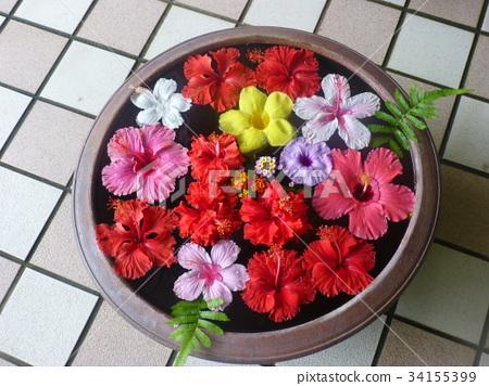 hibiscus 34155399