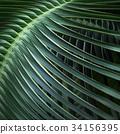 樹葉 葉子 植物 34156395