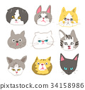 动物 变体 类型 34158986