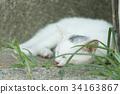 猫 猫咪 小猫 34163867