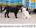 검은 고양이와 오드아이의 흰색 고양이 고양이 34163876
