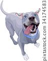 Funny Pit Bull Dog 34174583