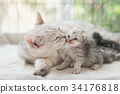 cat kissing her kitten with love 34176818