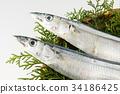 ปลา,ฤดูใบไม้ร่วง,อาหาร 34186425