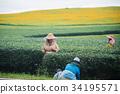 พื้นหญ้า,ทุ่งนา,นา 34195571