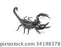 Scorpion isolated on white background 34196378