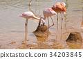 韓國 火烈鳥 3 34203845