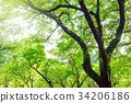 森林公園樹 34206186