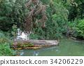 Fallen log in the muddy backwaters 34206229