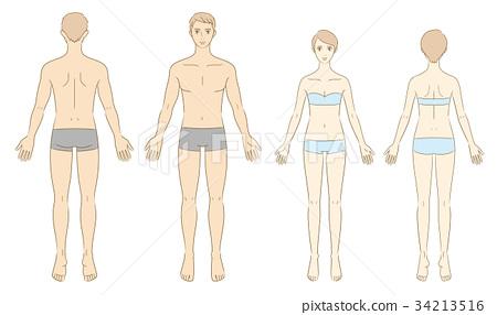 男性和女性人體例證 34213516