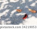 ผักใบ,ฤดูใบไม้ร่วง,ไม้ 34219053