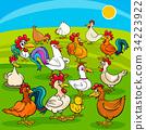 cartoon chickens farm animals group 34223922