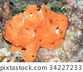 魚 水下照片 海底的 34227233