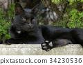 แมว,ที่ว่าง,น่ารัก 34230536
