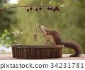 squirrel playing on a saxophone 34231781