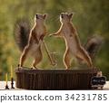 松鼠 动物 乐器 34231785