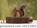 squirrel holds  a violin 34231802