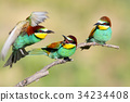 bird,branch,birds 34234408