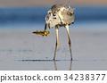 heron, bird, fishing 34238377
