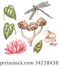 Set of hand drawn watercolor botanical 34238436