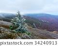 mountain tree hoarfrost 34240913
