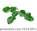 Kaffir lime leaves isolated on white background 34242831