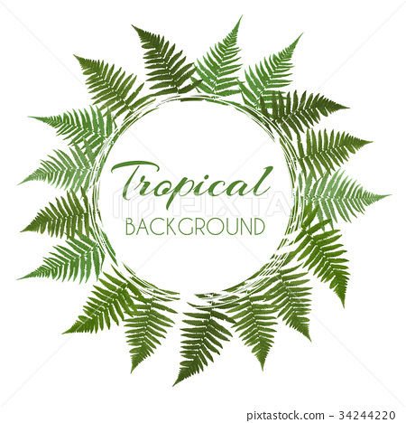 Fern Leaf Vector Background  with White Fram 34244220